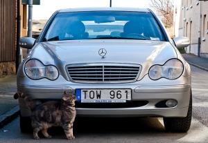 katter och bilar