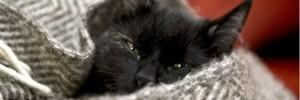 Katter har inte nio liv